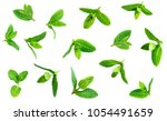 fresh mint leaves pattern... | Shutterstock . vector #1054491659
