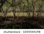 Australian Bush Landscape....