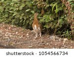 stone partridge in a summer... | Shutterstock . vector #1054566734