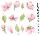 cherry blossoms watercolor set. ... | Shutterstock . vector #1054586576