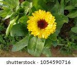 flower background nature | Shutterstock . vector #1054590716