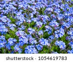 spring nature background with... | Shutterstock . vector #1054619783