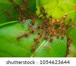 Small photo of ants,ants ants team work