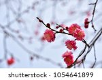 plum blossoms  with selected... | Shutterstock . vector #1054641899