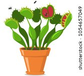 venus fly trap in a pot. vector ... | Shutterstock .eps vector #1054657049