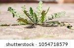 weeds grow between the paving... | Shutterstock . vector #1054718579