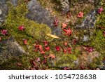 maple leaves is colorful on top ... | Shutterstock . vector #1054728638