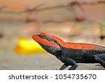 a lizard on ground | Shutterstock . vector #1054735670