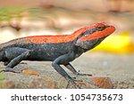 a lizard on ground | Shutterstock . vector #1054735673