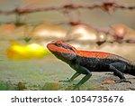 a lizard on ground | Shutterstock . vector #1054735676