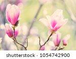 magnolia flowers blossom  | Shutterstock . vector #1054742900