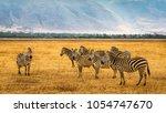 herd of zebras in the... | Shutterstock . vector #1054747670