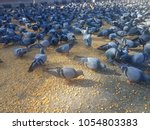 pigeon shots and background  | Shutterstock . vector #1054803383