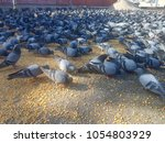 pigeon shots and background  | Shutterstock . vector #1054803929