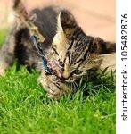 Stock photo gray little kitten is playing at garden 105482876