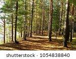 borodinka  omsk oblast   russia ... | Shutterstock . vector #1054838840