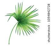 watercolor painting coconut... | Shutterstock . vector #1054842728
