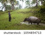 Small photo of Siargao, Philippines - MARCH 18, 2016: Unidentified Philippine man graze cattle carabao. Hard work of the local hinterland in the Philippines