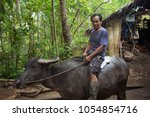 Small photo of Siargao, Philippines - MARCH 18, 2016: Unidentified Philippine man rides a cow carabao. Hard work of the local hinterland in the Philippines