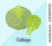cabbage vector illustration ...   Shutterstock .eps vector #1054869020