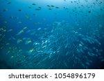 a lot of fish underwater in... | Shutterstock . vector #1054896179