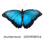 Stock photo blue morpho butterfly morpho peleides isolated on white background 1054908416