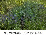 weed plants or field weed on... | Shutterstock . vector #1054916030