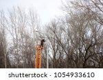 technician works in a bucket... | Shutterstock . vector #1054933610