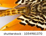 butterfly wing texture  macro | Shutterstock . vector #1054981370