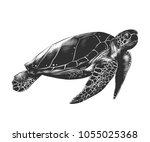 vector engraved style... | Shutterstock .eps vector #1055025368