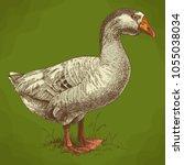vector antique engraving... | Shutterstock .eps vector #1055038034