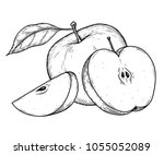 Apple Fruit Vector Illustration....
