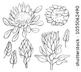 hand drawn flowers protea. ... | Shutterstock .eps vector #1055062490