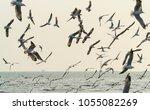 A Flock Of Migrant Seagulls...