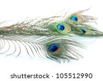 peacock feathers on white