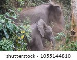 Small photo of adult and young African Forest Elephant Loxodonta cyclotis dust bathing in Kibale National Park, Uganda