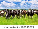 cattle eating grass in the... | Shutterstock . vector #105515324