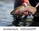 Fishing Rainbow Trout
