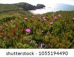 scenic beach overlook high... | Shutterstock . vector #1055194490