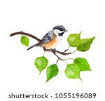 Small bird on branch with green leaves. Watercolor