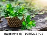 mint. bunch of fresh green... | Shutterstock . vector #1055218406