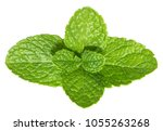 mint leaves isolated without... | Shutterstock . vector #1055263268
