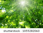 the sun shines in the green... | Shutterstock . vector #1055282063