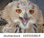 face of an owl opening its mouth | Shutterstock . vector #1055333819