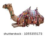 Camel  Decorated With Saddle ...