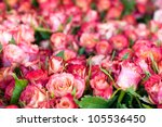 Stock photo roses 105536450