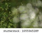 detailed abstract meadow grass...   Shutterstock . vector #1055365289