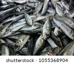 fresh fishes in a market.    Shutterstock . vector #1055368904