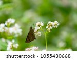 insects fly around wildflowers...   Shutterstock . vector #1055430668