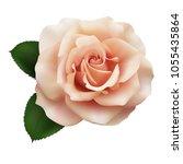 realistic pink tea color rose ... | Shutterstock .eps vector #1055435864